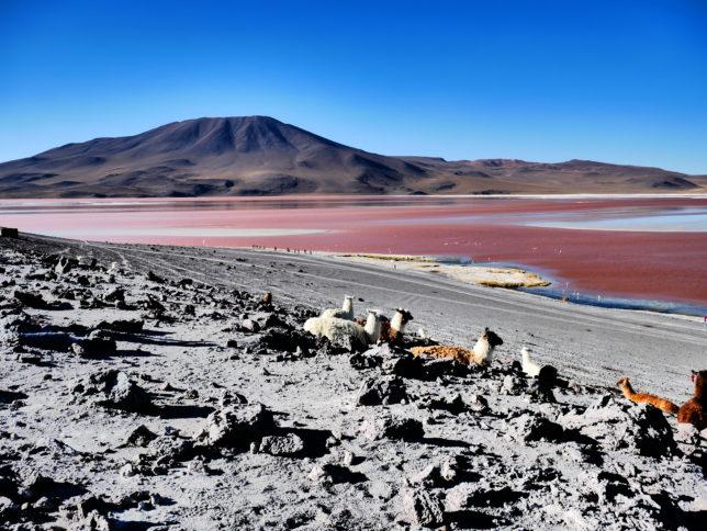 Laguna Rossa_Bolivia